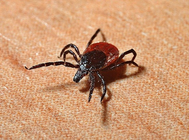 Lyme Disease: Functional Medicine Perspective w/ Dr Mark Menolascino