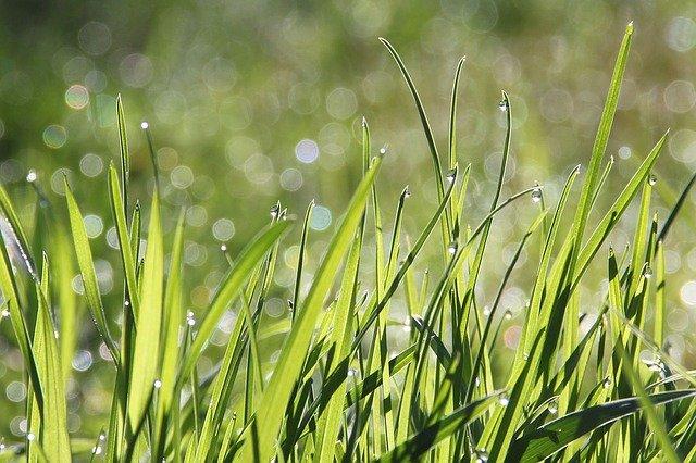 10 Grass Pollen Allergies